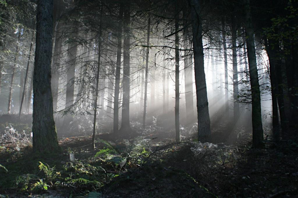 Wald8