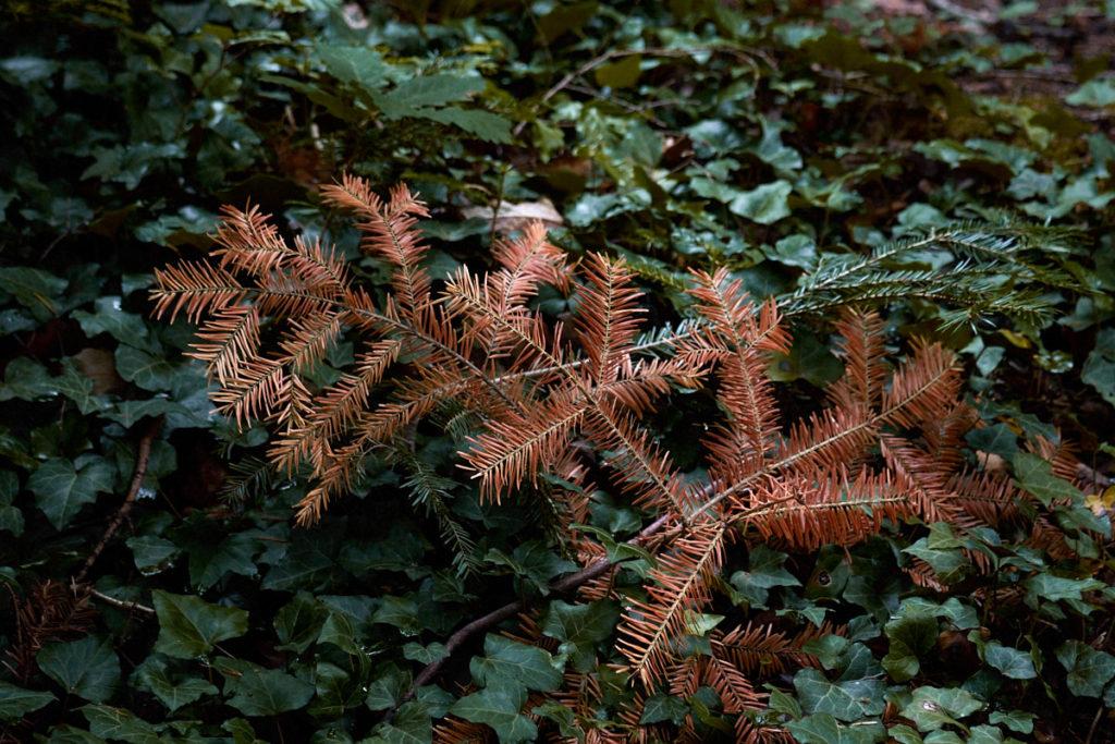 Wald11