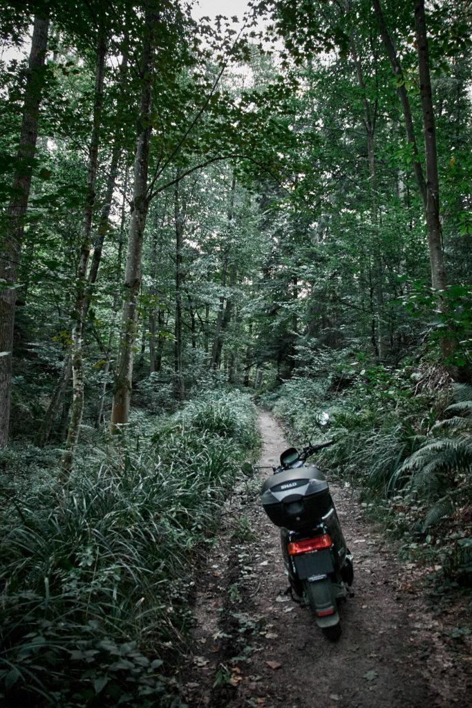 Wald15
