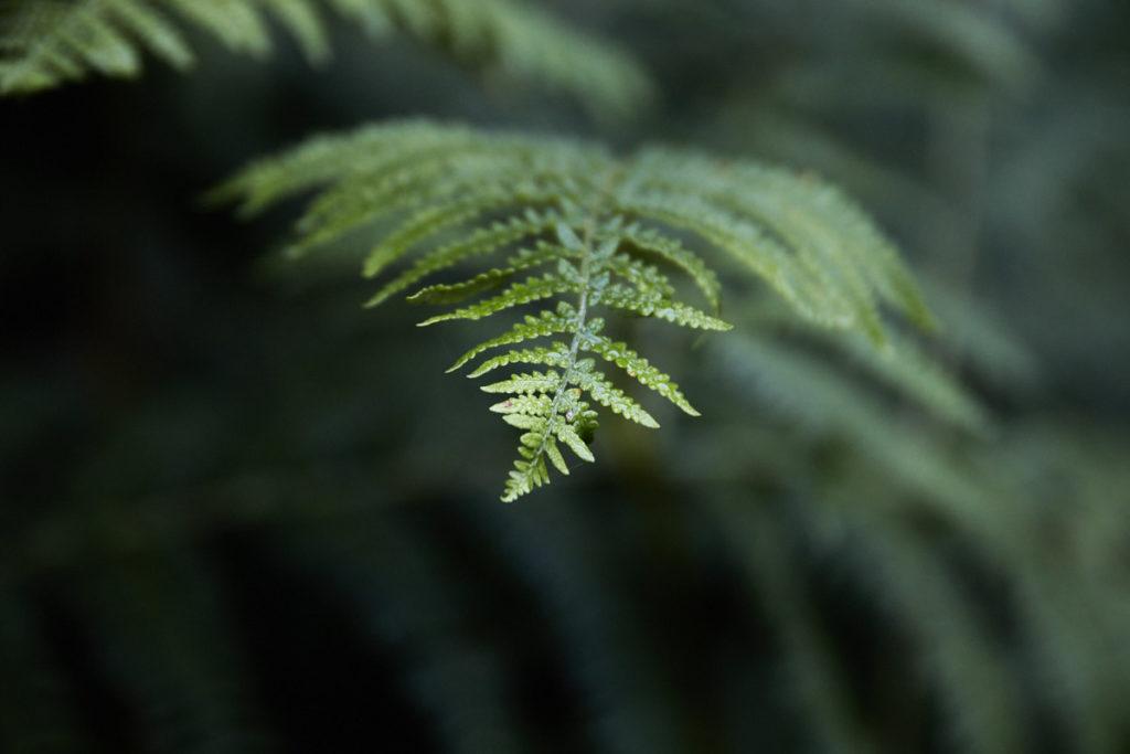 Wald13