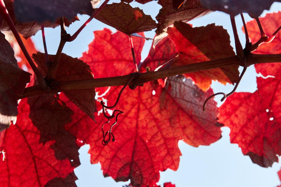 Herbstreben8