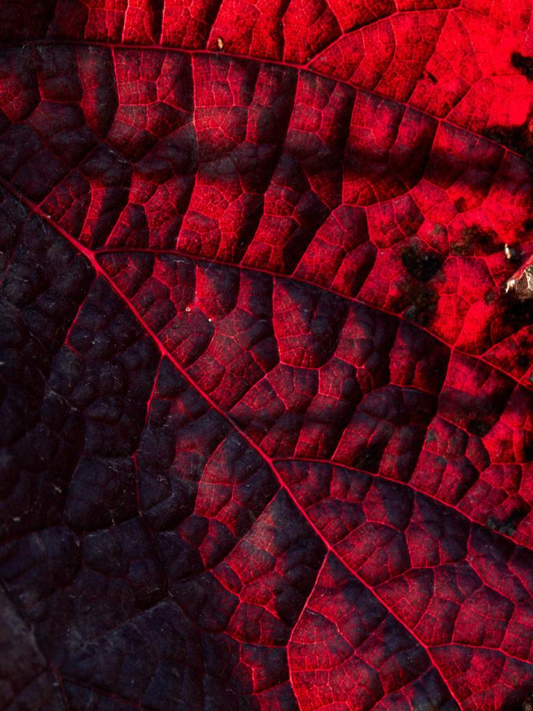 Herbstreben4