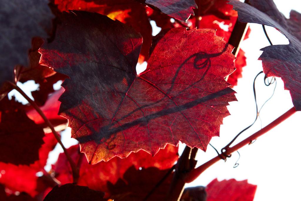 Herbstreben3