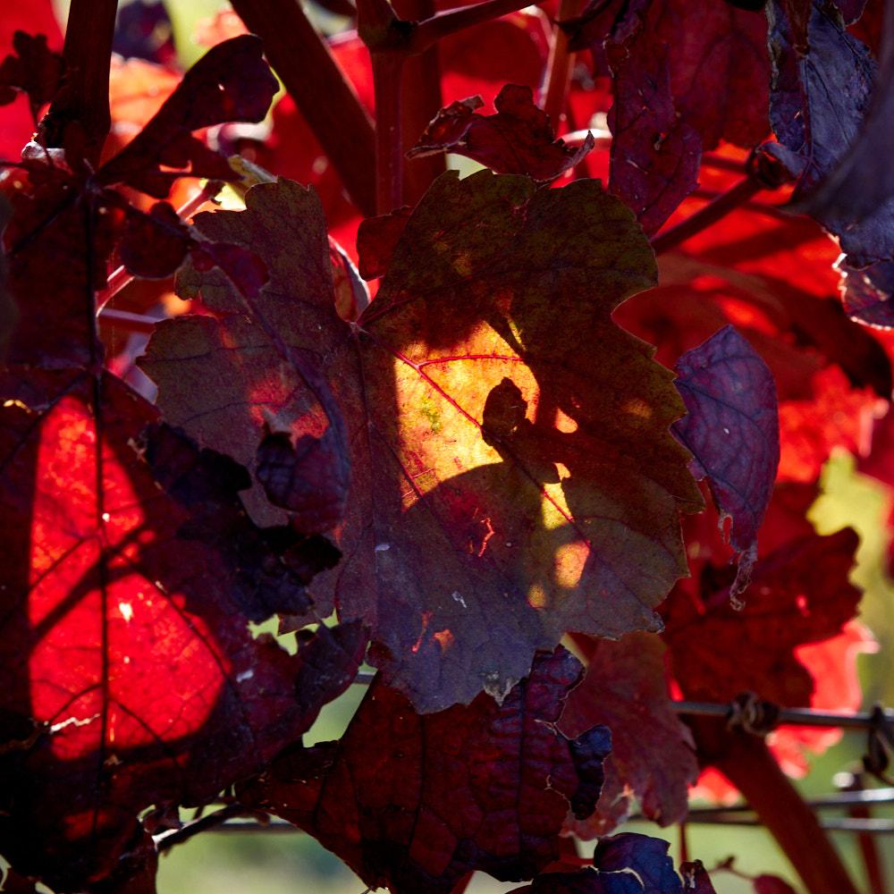 Herbstreben2