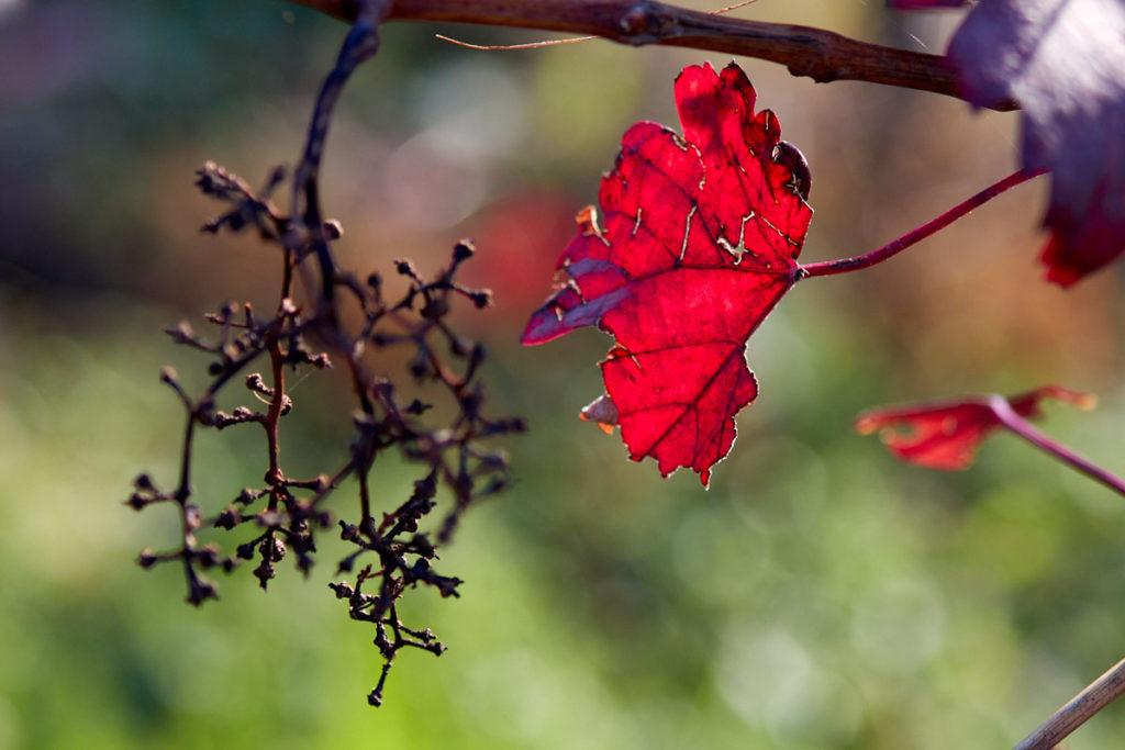 Herbstreben1