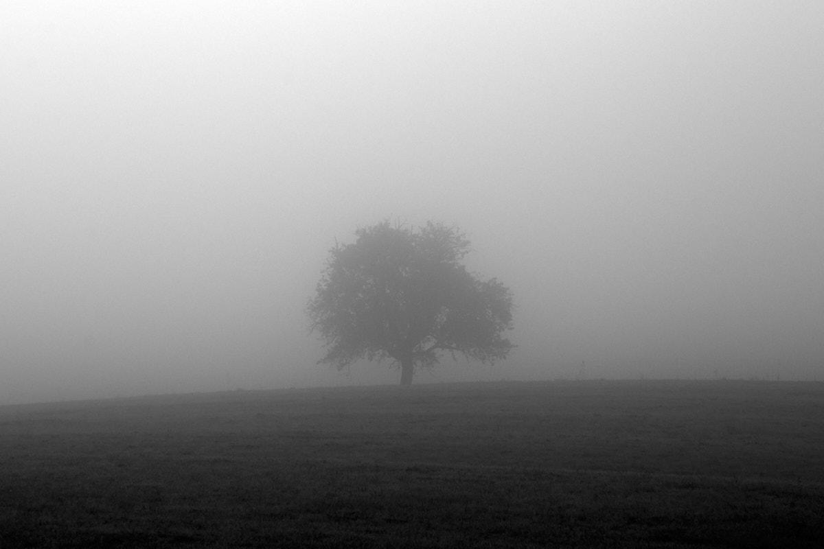 Nebel8