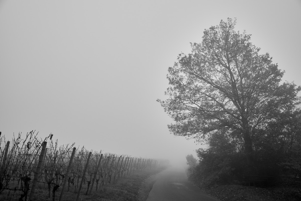 Nebel7