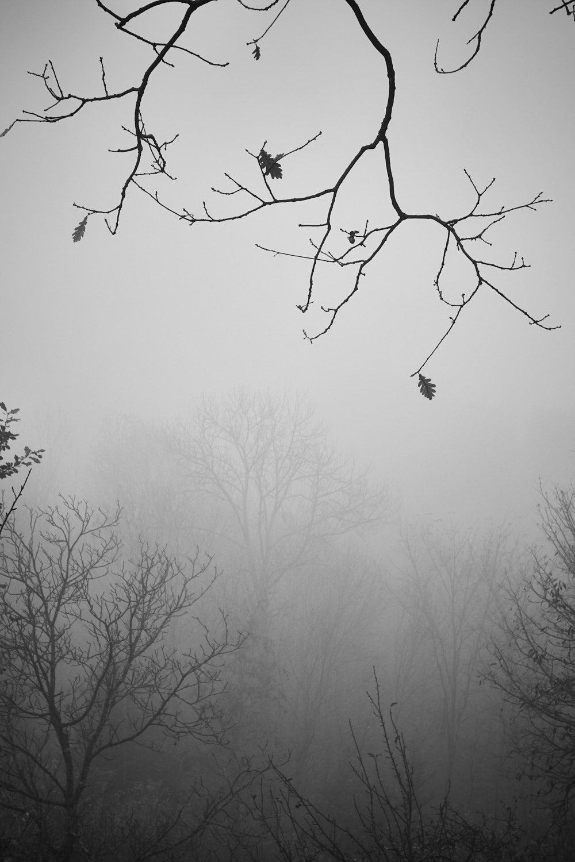 Nebel6