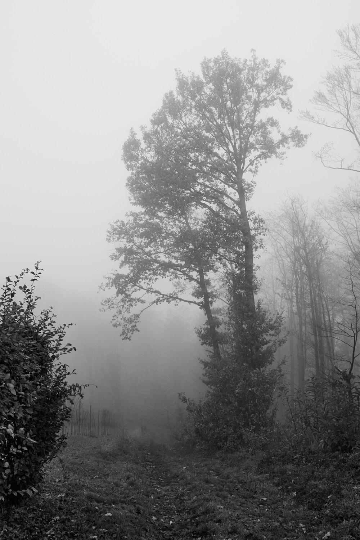 Nebel5
