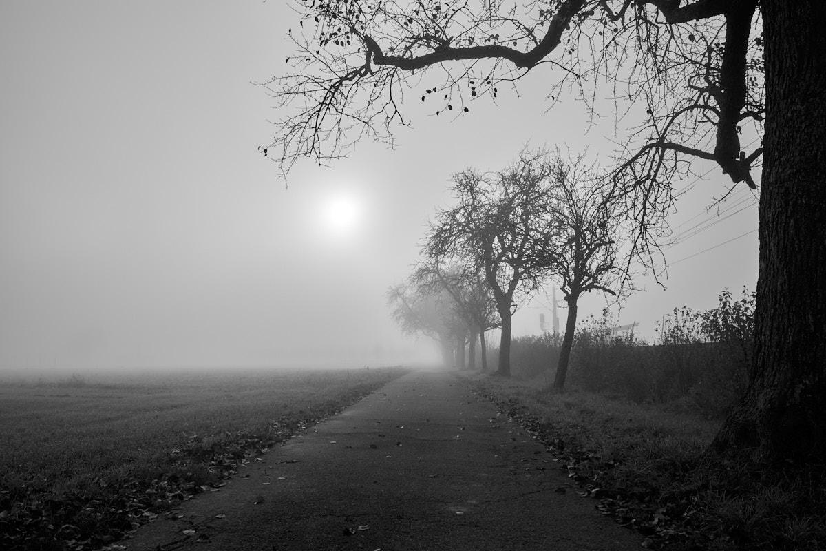 Nebel16