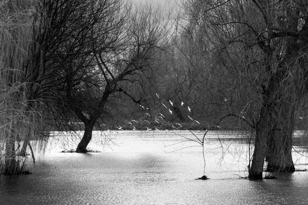 Seenlandschaft15