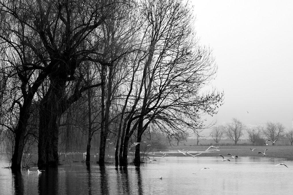 Seenlandschaft12