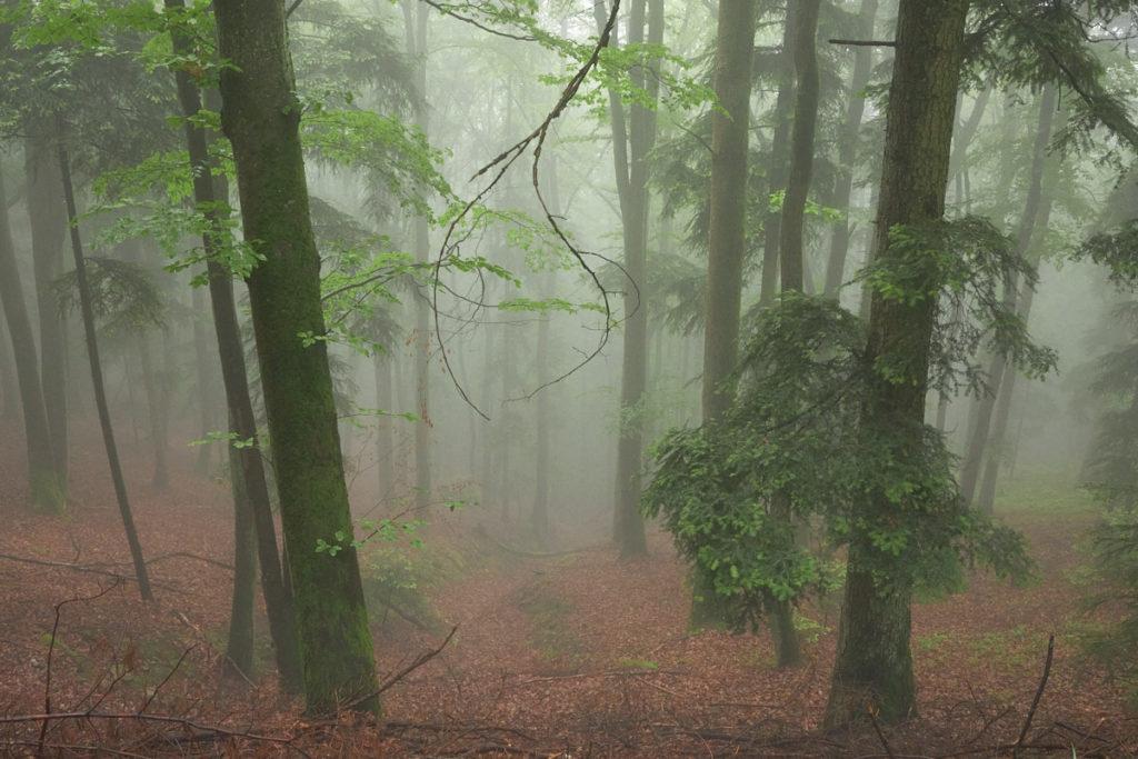 Nebelwald0621_5